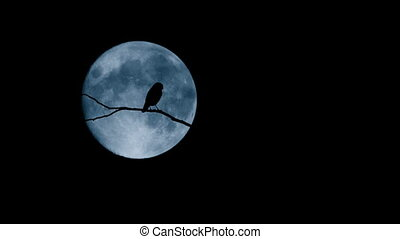 Bird On Branch Flies Off With Full Moon Behind - Silhouette...