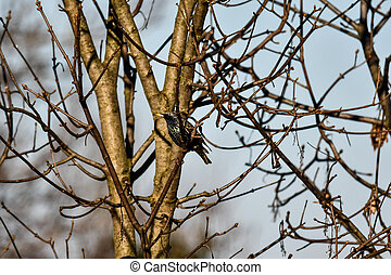 bird on branch, photo as a background