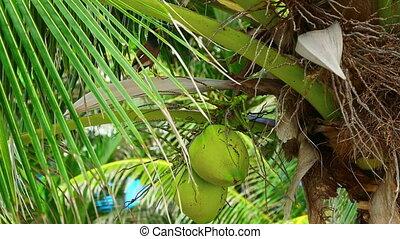 Bird on coconut tree
