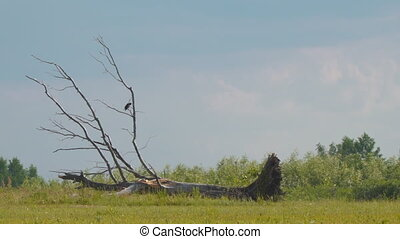 Bird on dry fallen tree