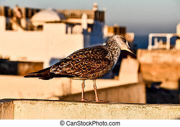bird on fence, photo as background