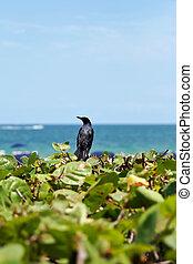 Bird on plants ocean view