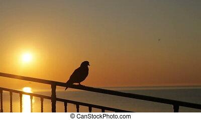 Bird on railing