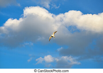 Bird on the background of blue sky