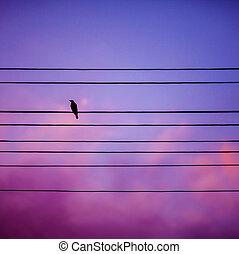 Bird on the background