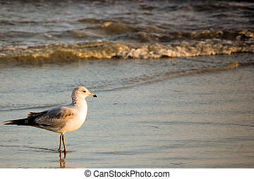 Bird on the Beach - Background Template