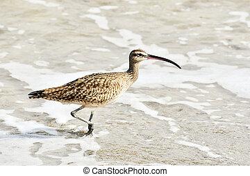 bird on the beach, photo as a background