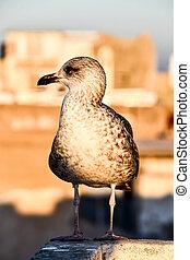 bird on the beach, photo as background