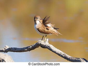 Bird on the brunch