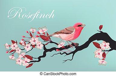 Bird on the cherry branch