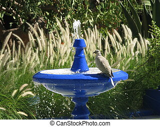 Bird on the blue drinking fountain in nature