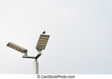 Bird on the lamp on blue sky background
