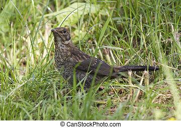 bird on the meadow