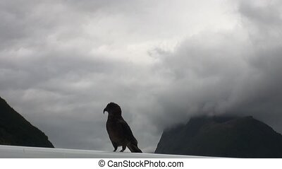 Bird on the roof of a car in the green mountains of New Zealand.