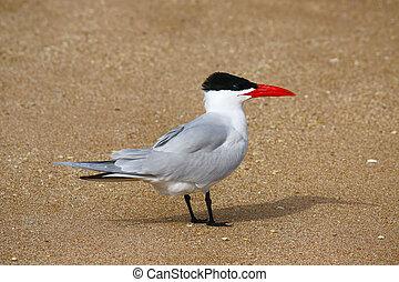 bird on the shore
