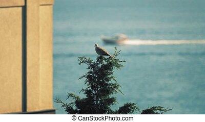 Bird on the top of the tree against sea scenery - Bird on...