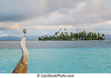 bird on tree trunk with ocean and palm tree island background -