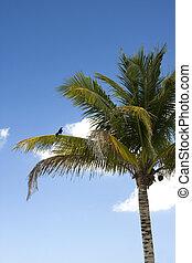 Bird on Tropical Palm Tree