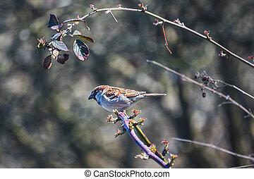 bird - one sparrow on a bush
