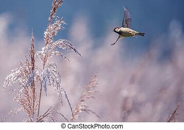 Bird over bright summer background