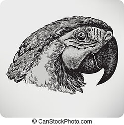 Bird parrot, hand drawing, vector illustration.
