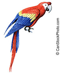Bird Parrot Macaw - Colored drawing on the paper bird Parrot...