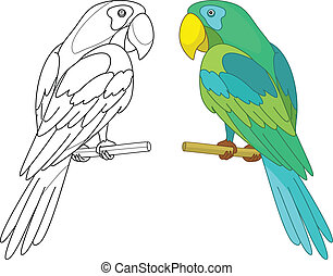 Bird parrot sits on a wooden perch, colored and black contour on white background. Vector
