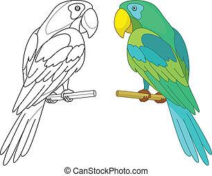 Bird parrot on a perch - Bird parrot sits on a wooden perch...