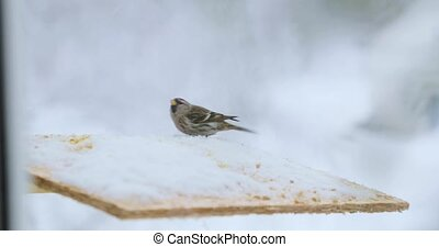 Bird pecks seeds in the bird feeder in winter.