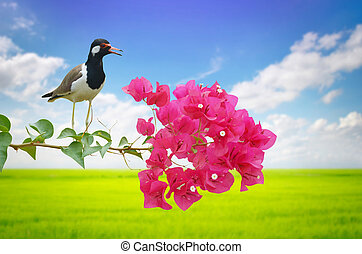 bird perched on branch
