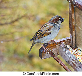 Bird Perched on Feeder