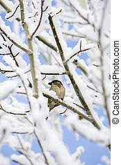 bird perched on tree branch in snow