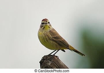 Bird perching - Nature shot of small bird perching on a ...