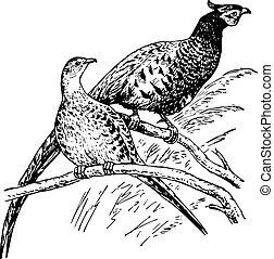 Birds phasianus sitting on the brances of the tree