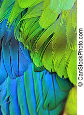 Bird Plumage feathers - Closeup of a birds colourful plumage...