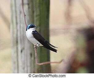 Bird, post, wire