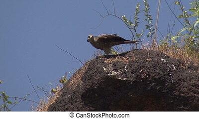 bird prey stone