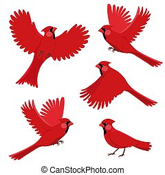 Bird red cardinal in different positions. Isolated vector ...