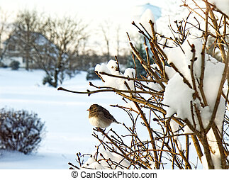 Bird Resting on Branch after Snow