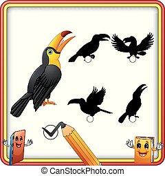 bird., rigolote, trouver, jeu, toucan, correct, ombre, education, enfants