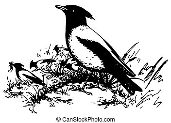 Bird Rosy Starling