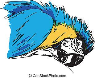 bird., rys, wektor, ara, ilustracja