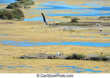 bird sanctuary on Island Ile de Re - bird sanctuary La ...