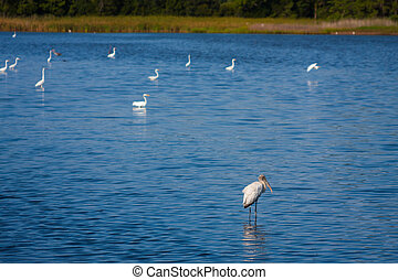 Bird Sanctuary - Variety of birds standing in shallow water ...