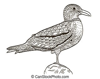 bird seagull coloring book for adults vector