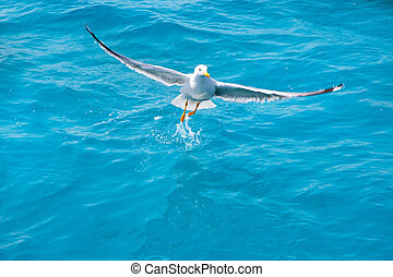 bird seagull on sea water in ocean - bird seagull on sea ...