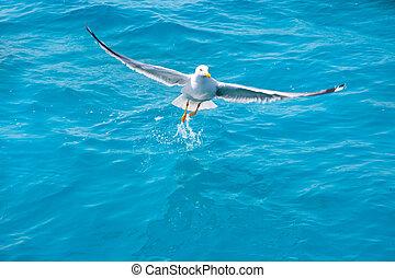 bird seagull on sea water in ocean - bird seagull on sea...