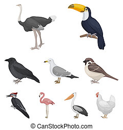 Bird set icons in cartoon style. Big collection of bird bitmap, raster symbol stock illustration