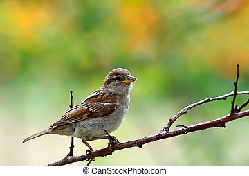 Bird (shrike) sitting on a branch