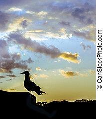 Bird Silhouette Against Sunset Sky